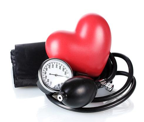 Herz-Kreislaufsystem | Avena